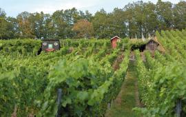 Die Weinlagen